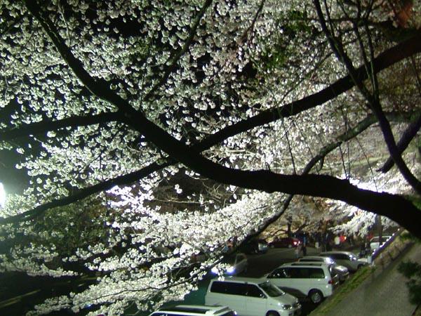 観音山市営駐車場 観音山市営駐車場の夜桜 まで約5分、そこから食堂や売... 高崎観音の紹介